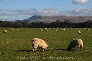 Photograph of Pendle Hill